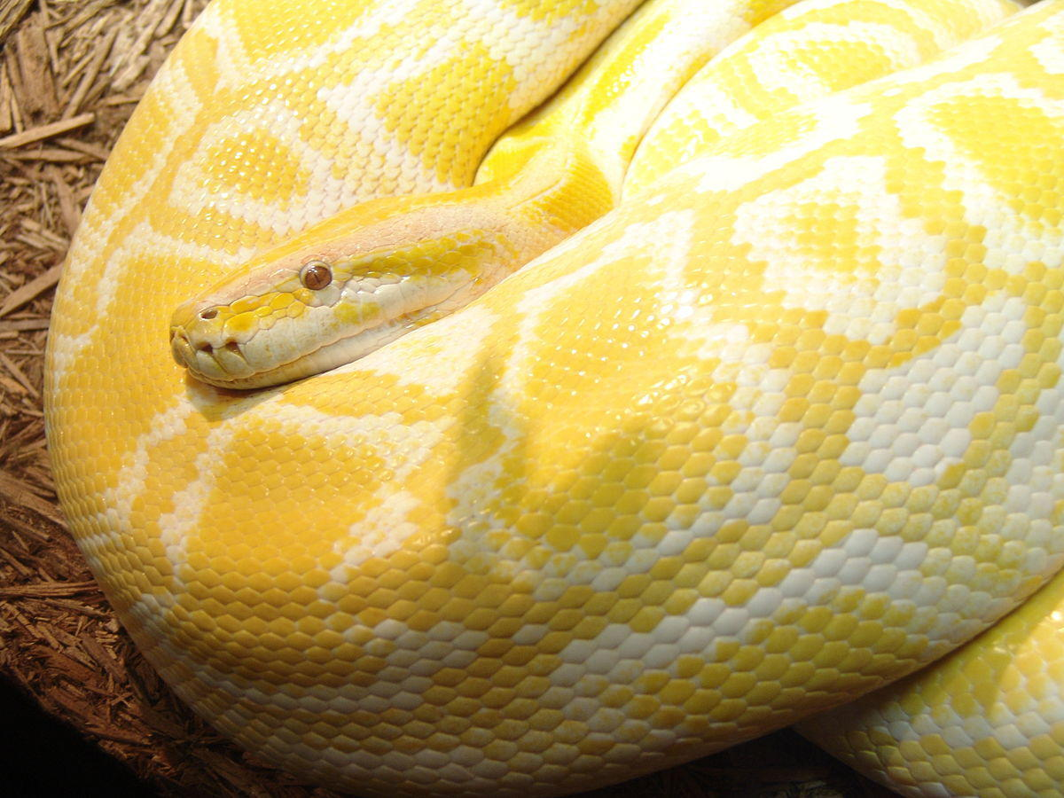 Zookeeper Attacked By Python