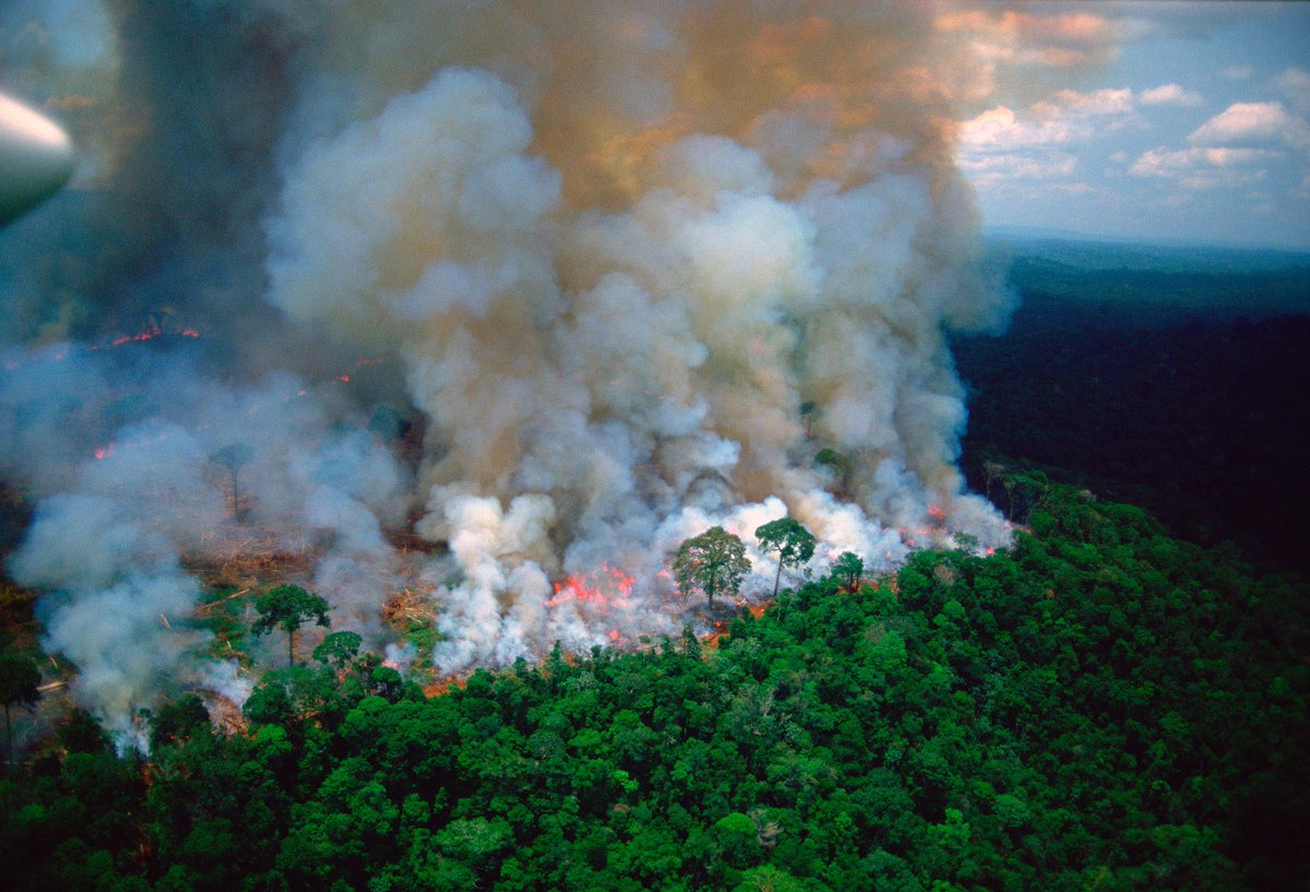Brazil Sends in Army to Fight Amazon Fires
