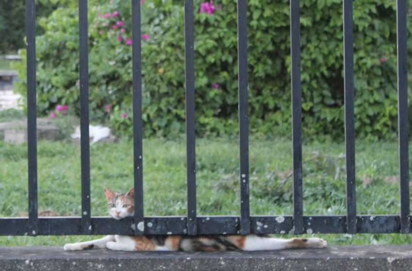 TTSPCA on Valsayn Cat Problem: Do Not Feed the Animals