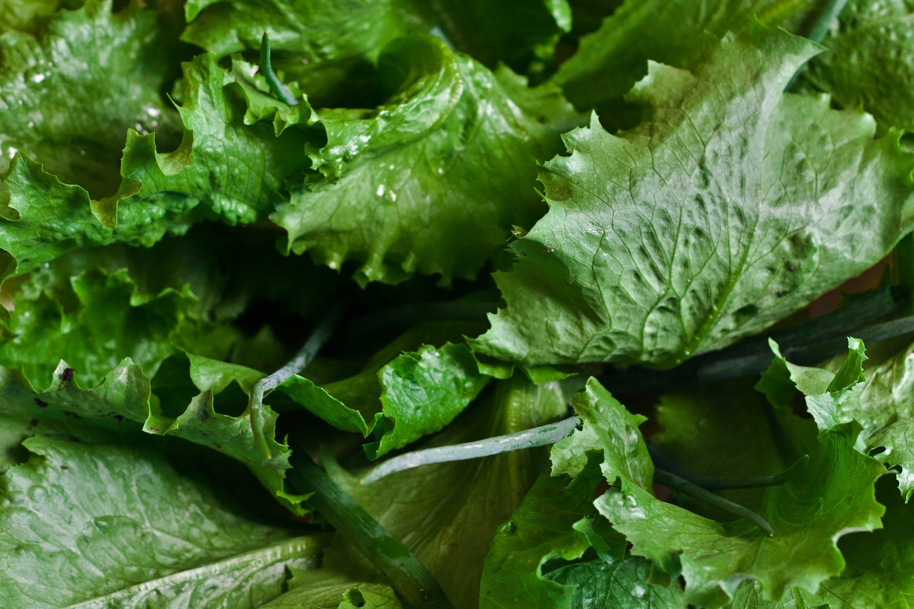 Warning: Don't Eat Romaine Lettuce