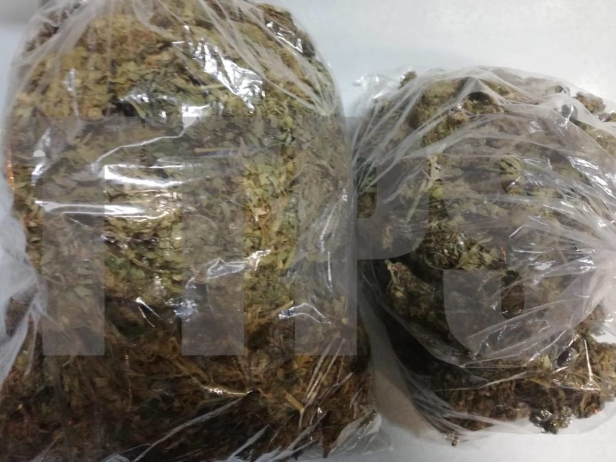 Half Kilo of Weed Seized in Sangre Grande