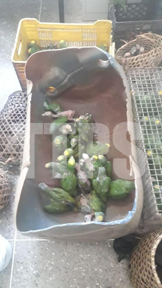 Police Arrest 2 Men for having Parrots Without a Permit