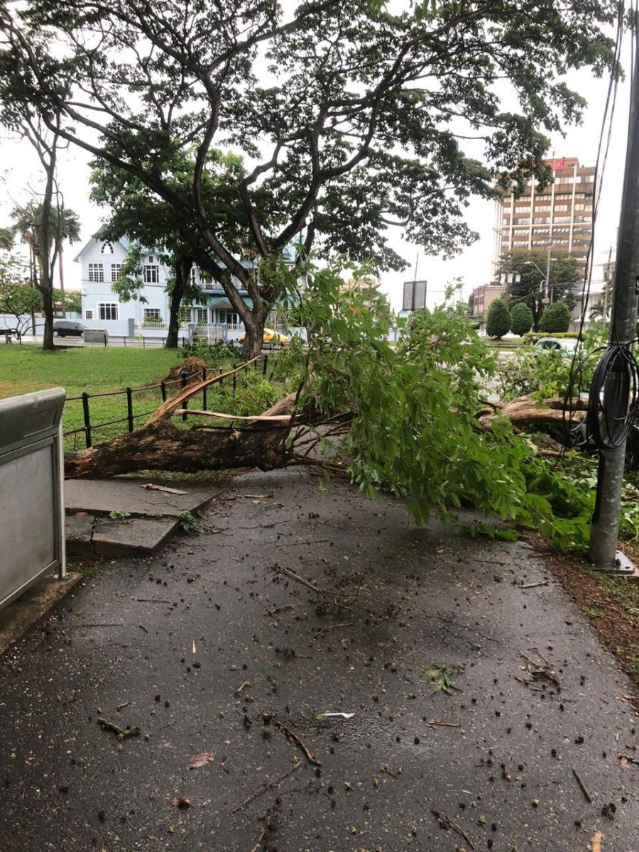 High Winds, Rain Topple Trees