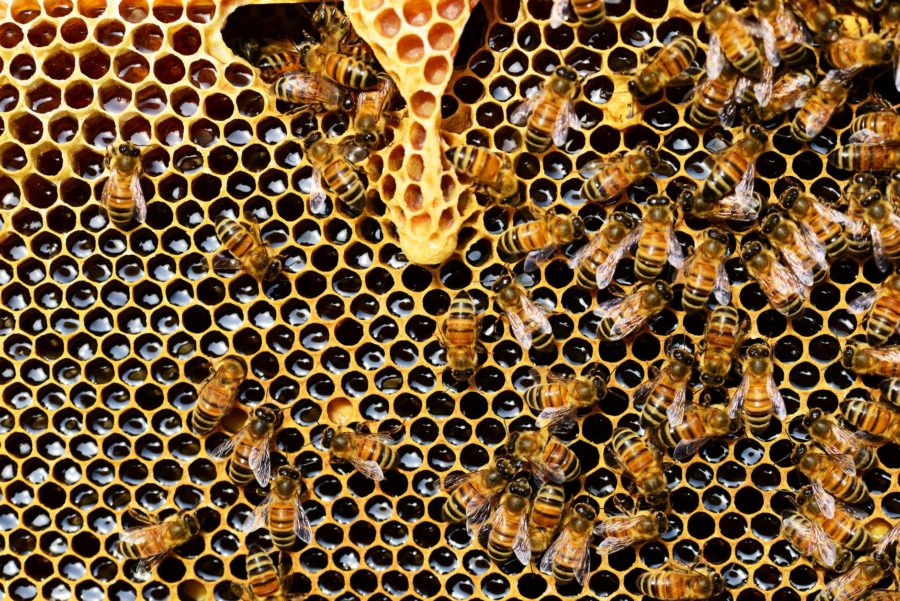Police Seize 43 Buckets of Honey