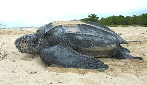 Sea Turtle Task Force Appointed
