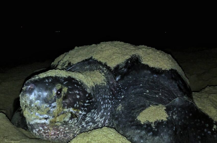 Increase in Poaching of Sea Turtles in T&T – EMA